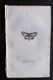 Captain Brown 1834 Antique Hand Col Moth Print. Small Magpie Moth 95 Britain